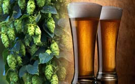 Beer, Wine & Hops Testing In Massachusetts