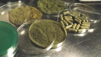 Michigan Kratom Testing Lab